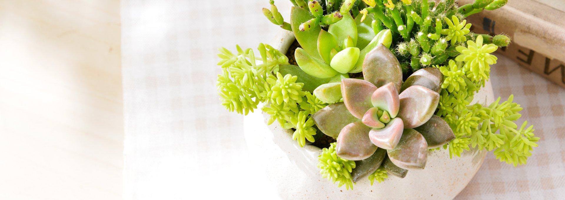 有肉 Succulent & Gift - 官方網站 4