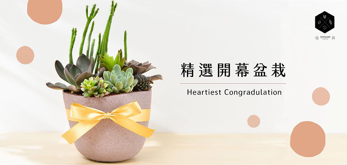 網路花店-開幕盆栽