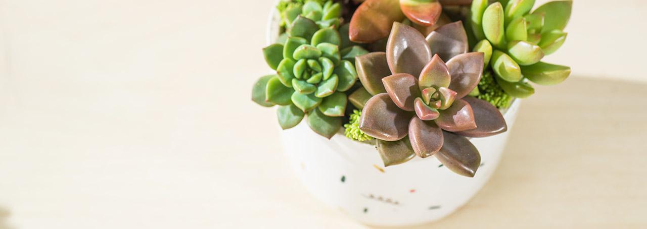 有肉 Succulent & Gift - 官方網站 3