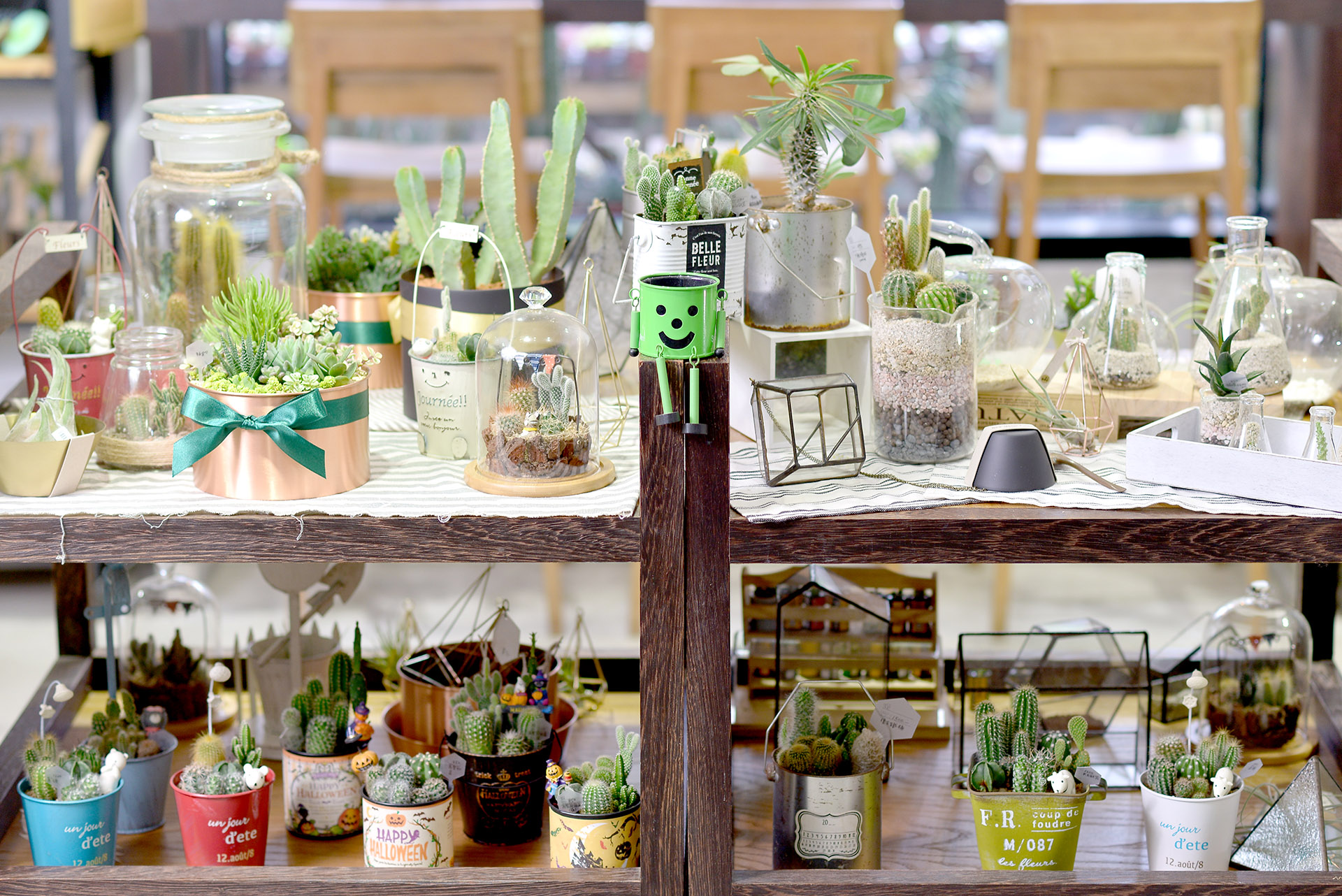 有肉週年慶店內多肉植物盆栽與設計師商品陳設_web1113