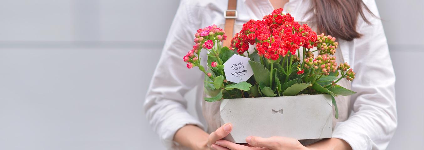 開幕賀禮 網路花店 多肉植物 組合盆栽