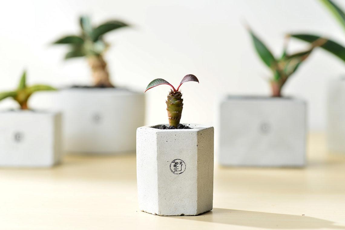 有肉 Succulent & Gift - 官方網站 13