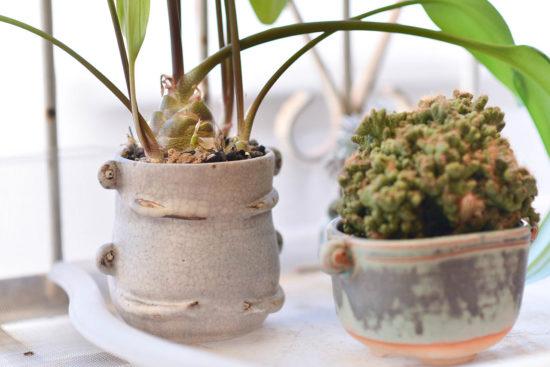 植物照顧教學&養護方案介紹 Kuwado 陶藝工作室拍攝 2