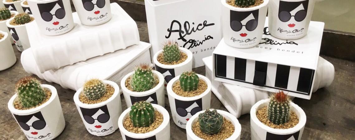 「媒體贈禮」Alice + Olivia 仙人掌植栽組
