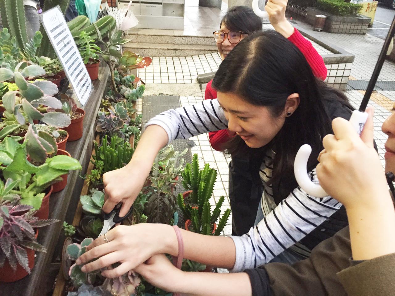 親手種植多肉植物,在企業活動裡是很特別的活動內容