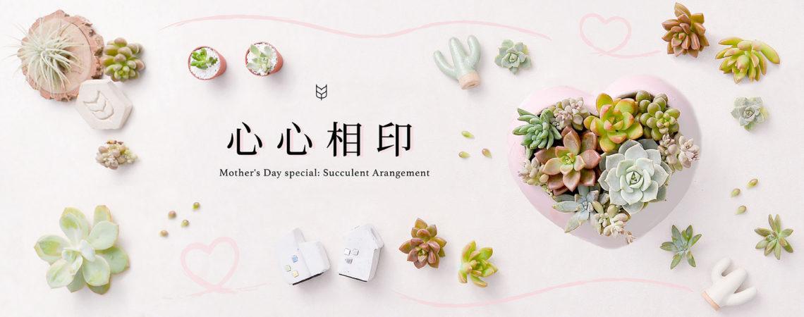 [ 多肉花藝 ] 心心相印 - 多肉盆栽 banner