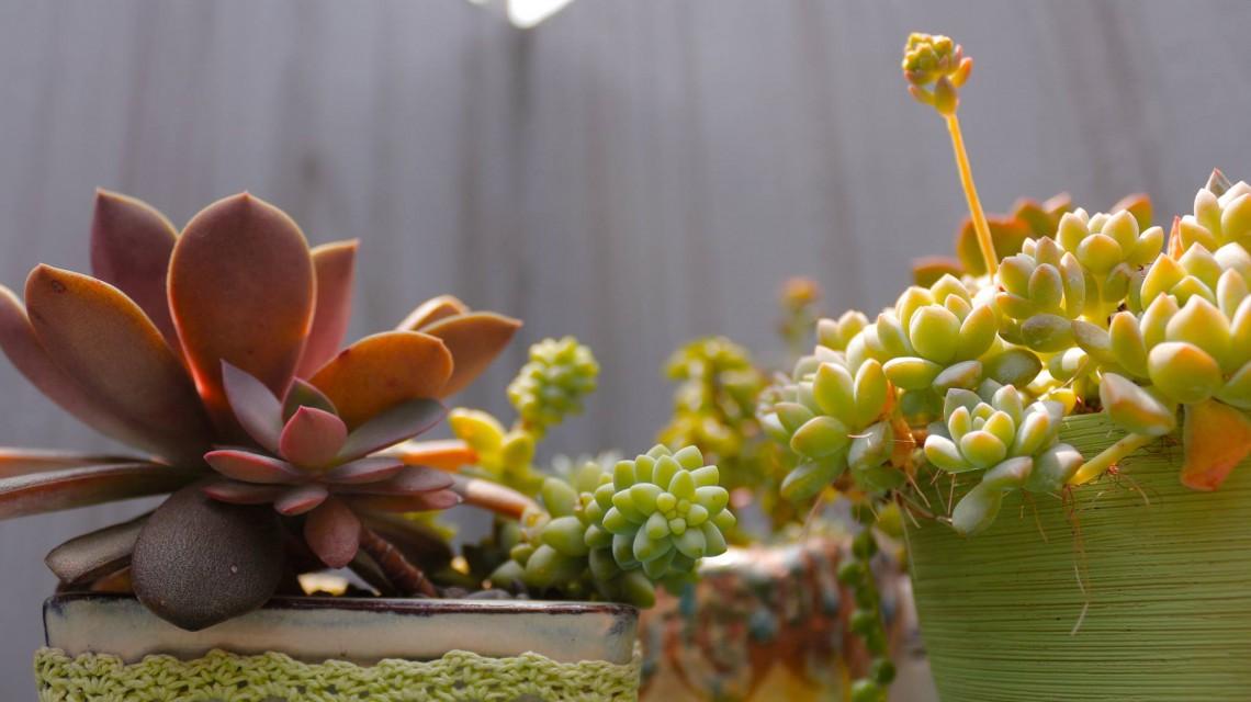 多肉植物造景牆