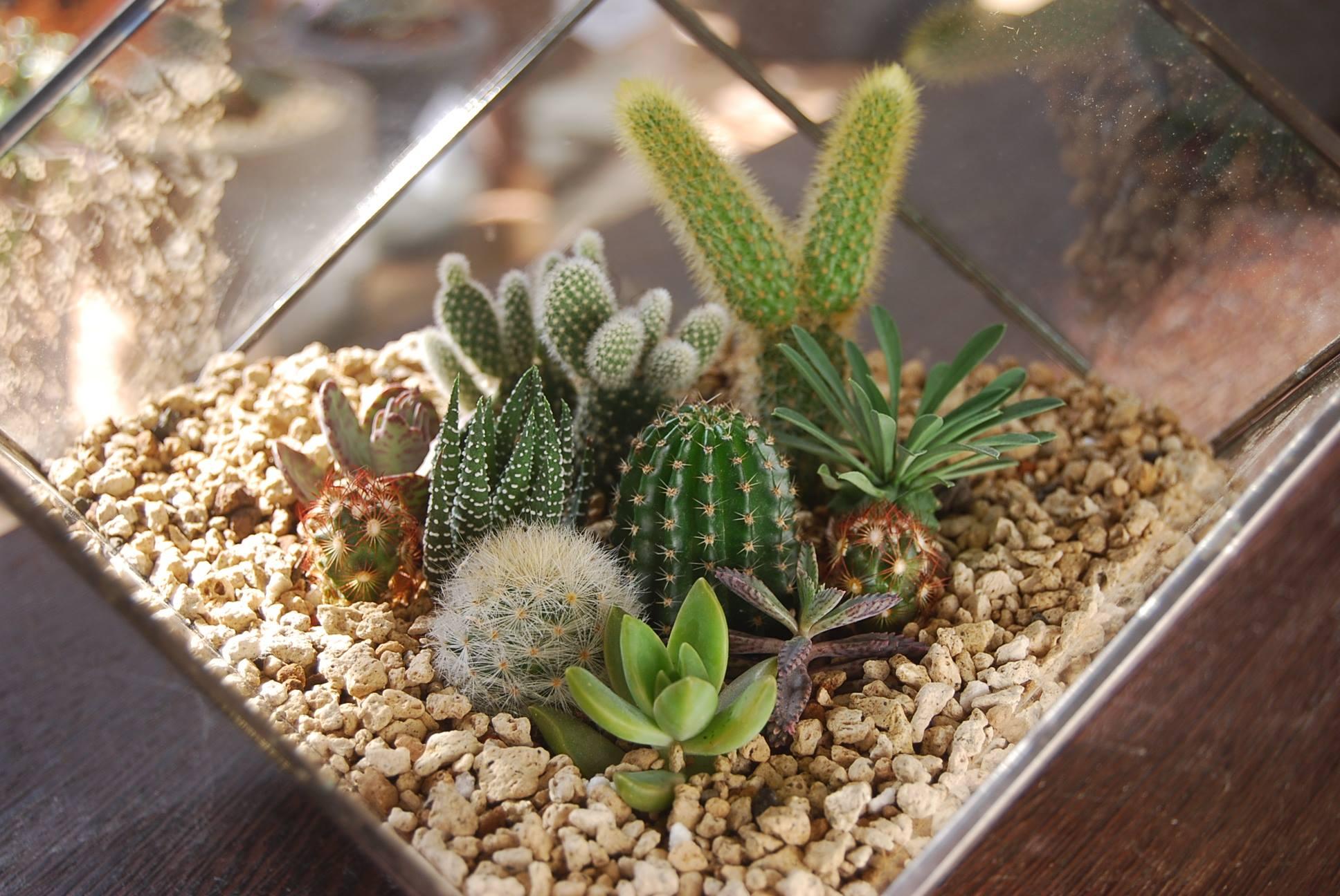 多肉植物組盆 四方形玻璃溫室 提拉米蘇組盆 開幕禮物