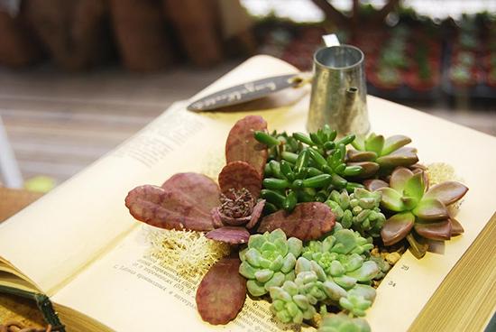 多肉藏書設計盆栽