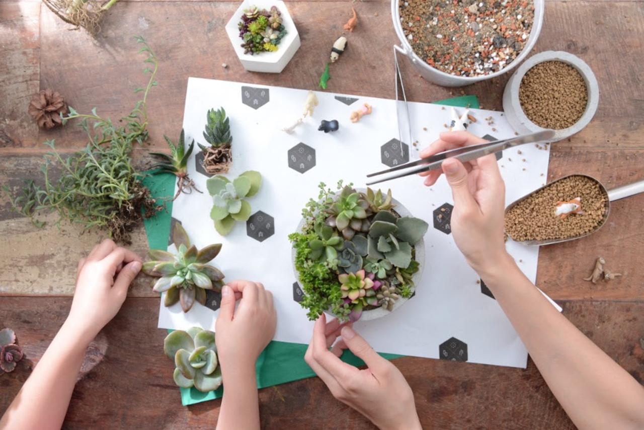 多肉植物組合盆栽 手作課程與水泥送禮盆栽