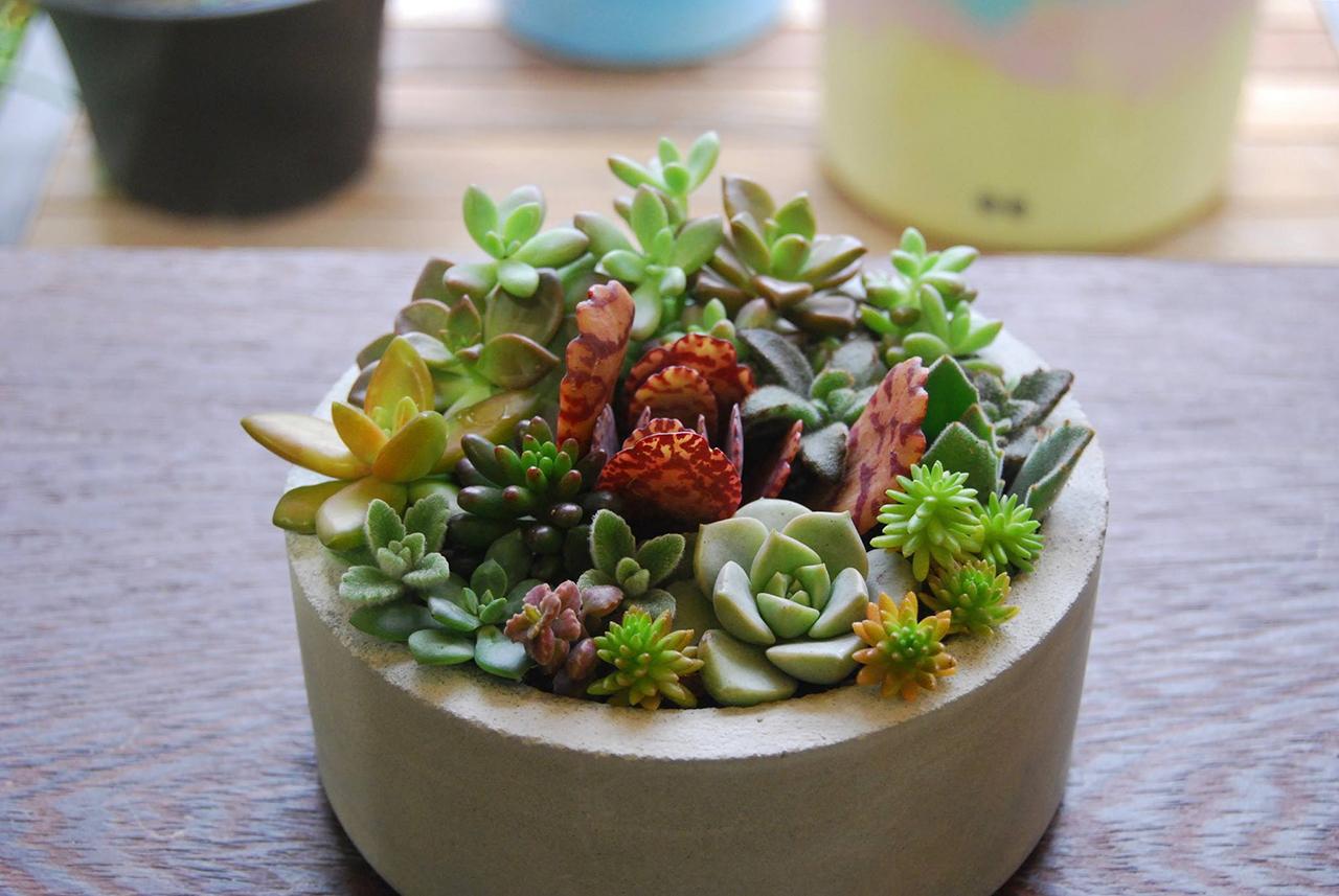 多肉植物盆栽