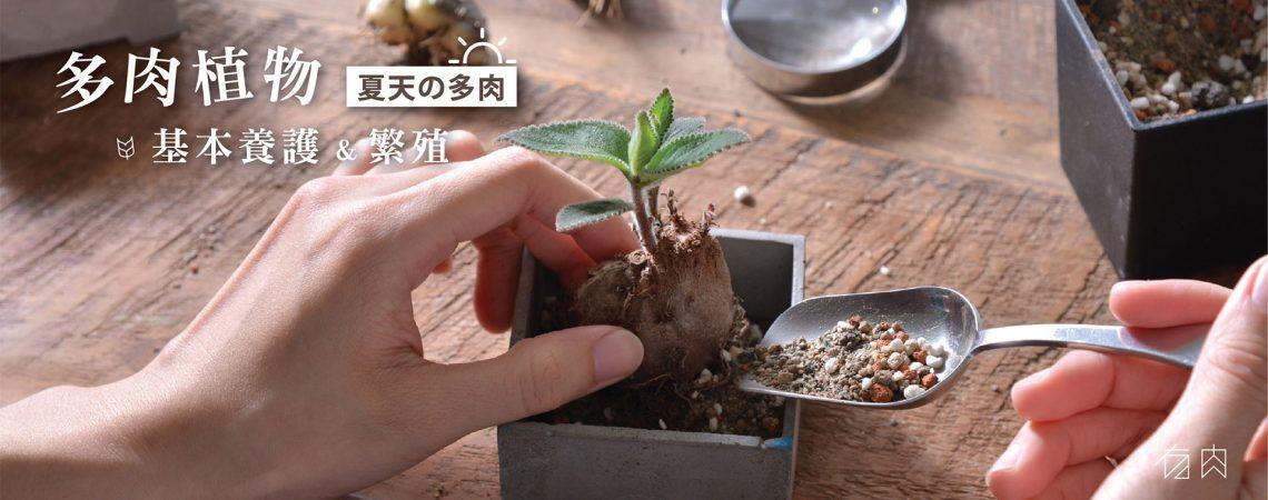 (額滿) 多肉植物基本養護與繁殖(夏天の多肉) 1