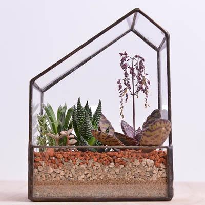 幾何形狀玻璃生態盆栽