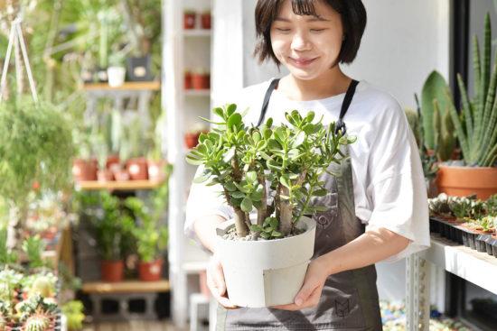 雲林買盆栽的新選擇,多肉盆栽送禮! 9