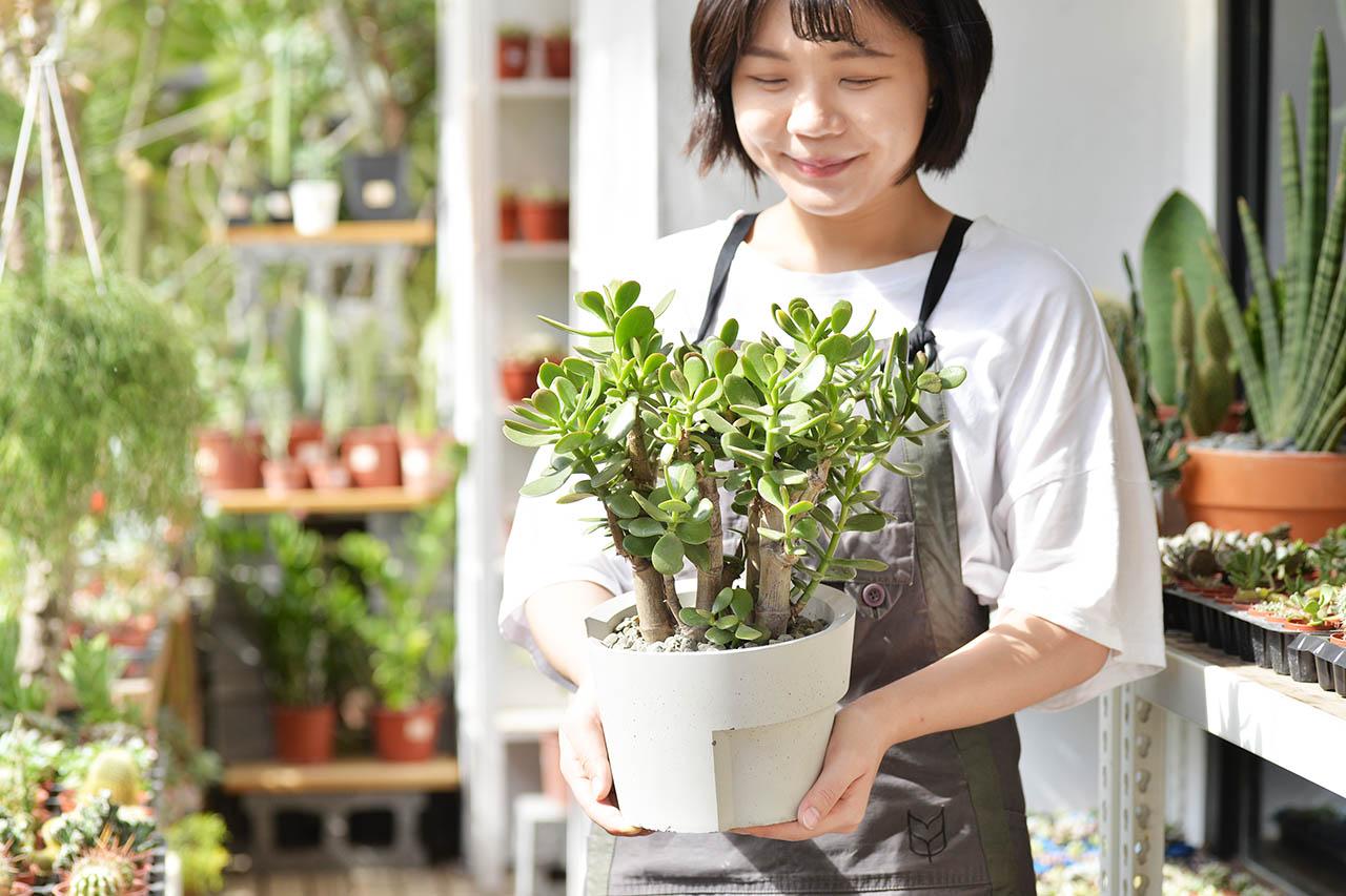 發財樹盆栽2021
