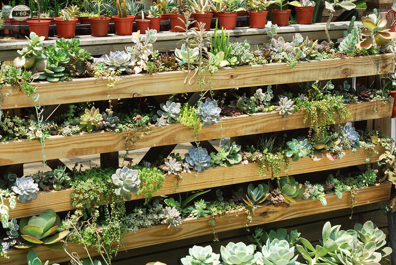 多肉生態植栽牆造景,如果需要造景服務,也可以找我們幫你們設計喔