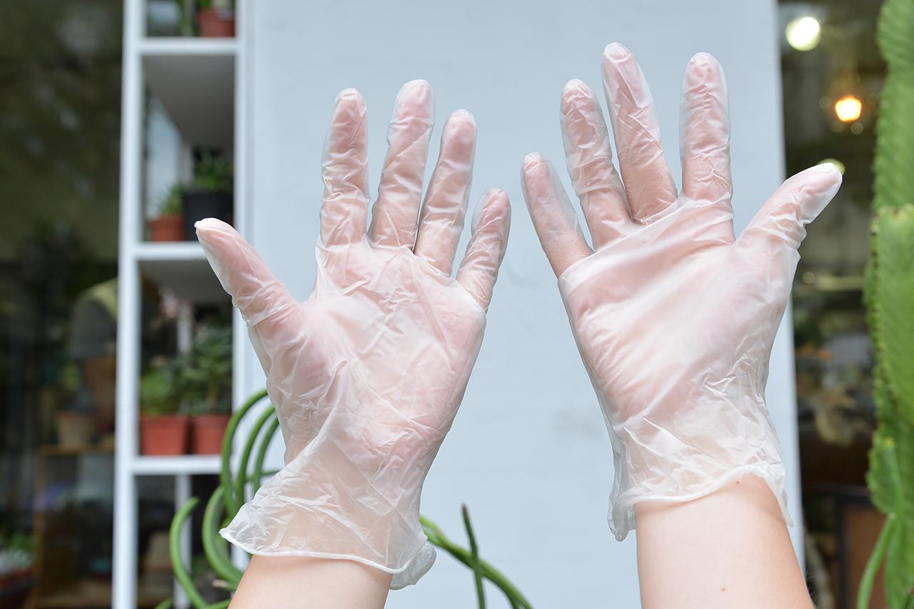 繁殖珊瑚大戟 戴手套 防止沾粘乳白汁液