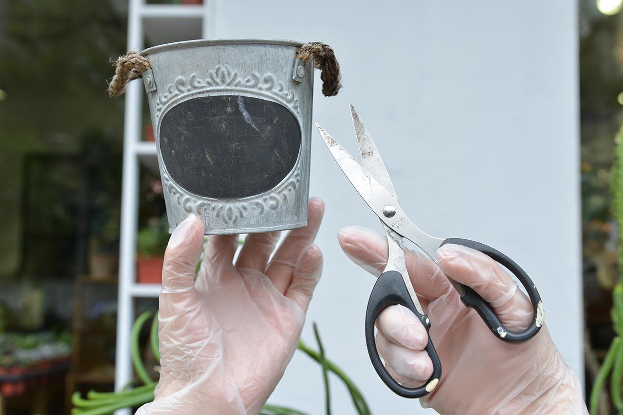 繁殖珊瑚大戟 準備工具 剪刀+容器