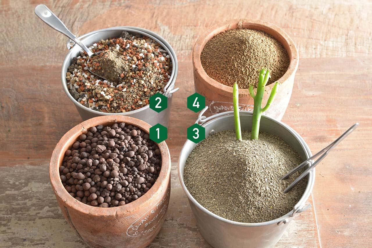 多肉植物介質介紹