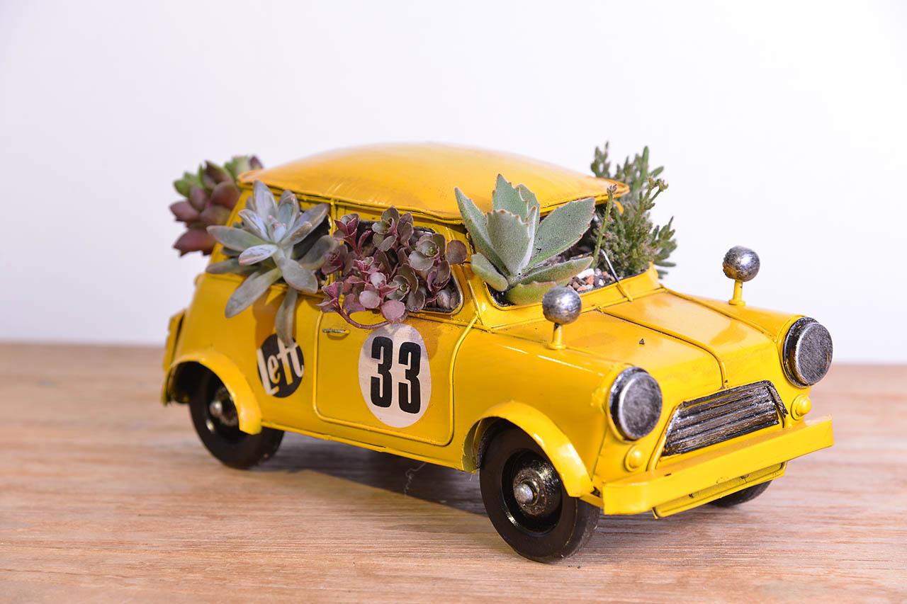 車型多肉盆栽禮物,適合送給好朋友