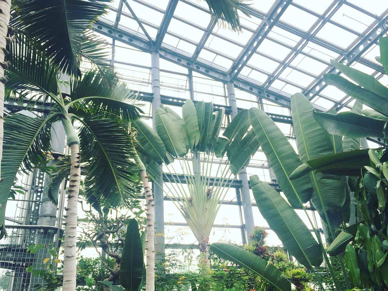 鮮花競放館熱帶植物旅人蕉