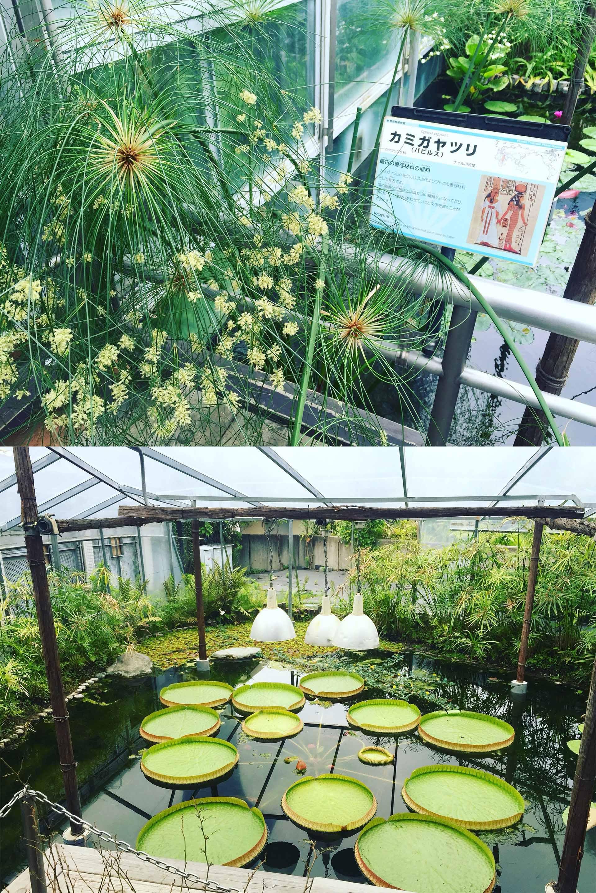 鮮花競放館水生植物