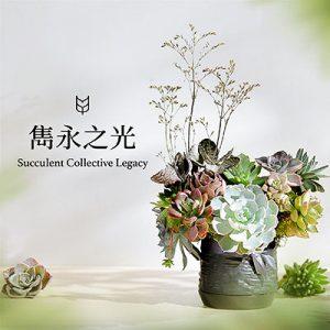 [ 花藝課程 ] 雋永之光:多肉盆花 12