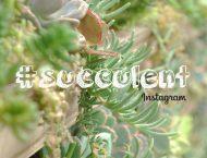 仙人掌、多肉植物的英文教學
