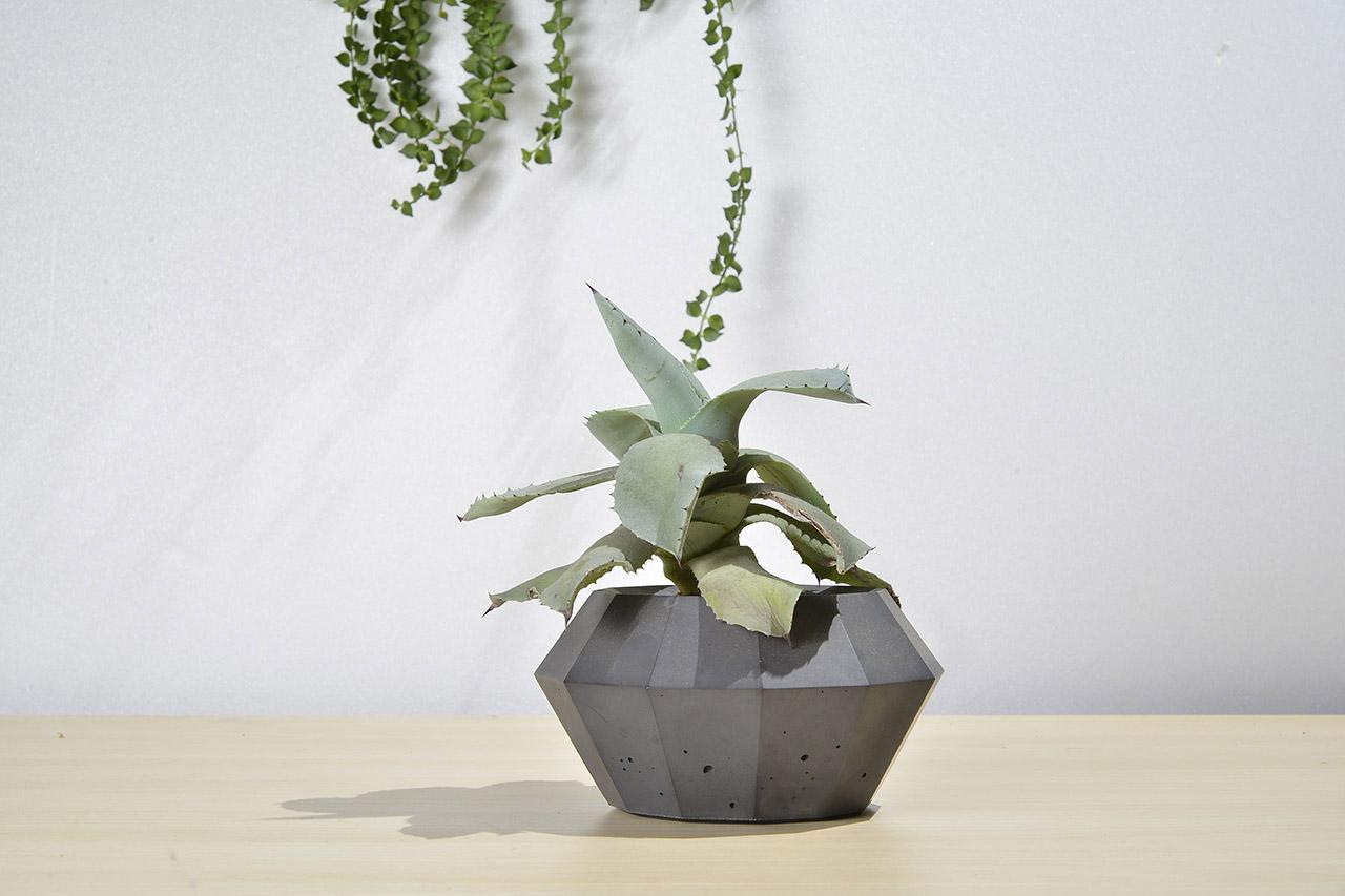 黑色水泥盆栽與龍舌蘭