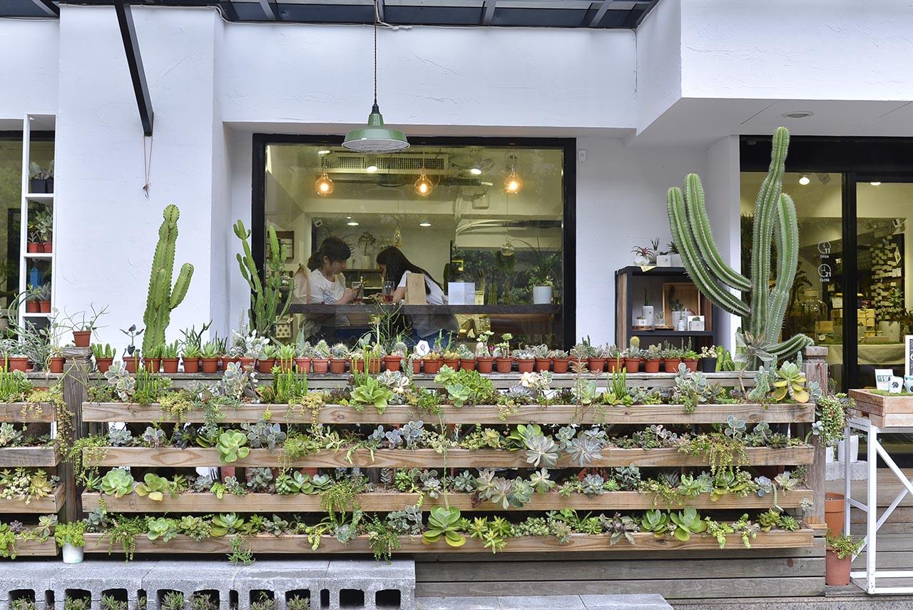 台北多肉植物牆