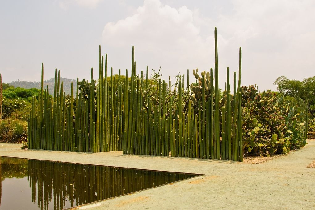 graeme-churchard-flickr-cc-oaxaca-cactus.1391566360