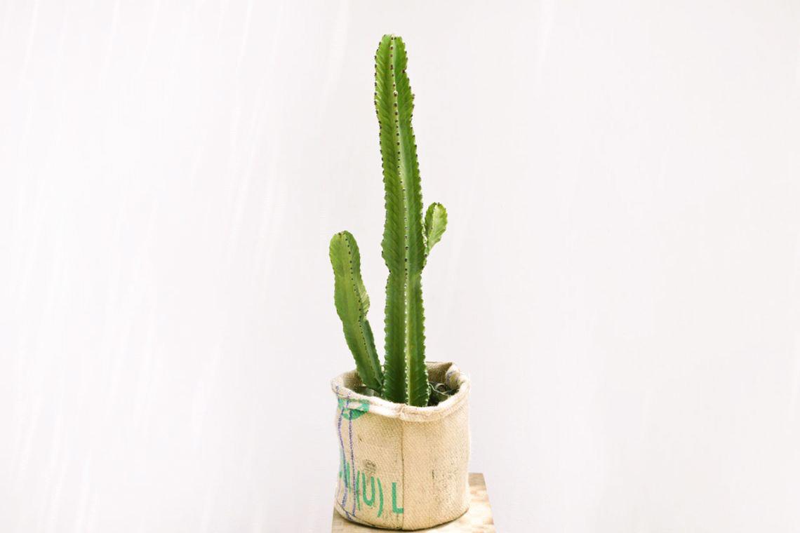 上帝閣-居家大型植物 麻布袋