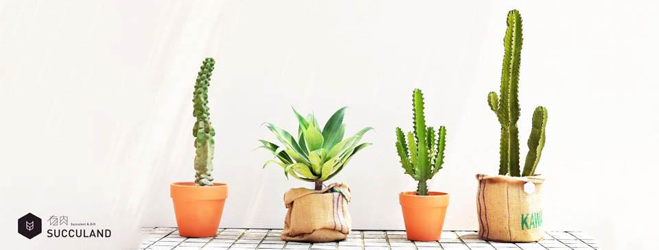 大型多肉植物、仙人掌盆栽帶進家裡就是這麼簡單。