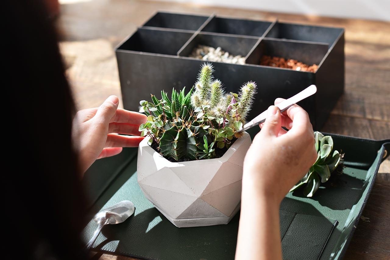 [ 多肉植栽 ] 居家辦公綠植藝 2021父親節禮物5
