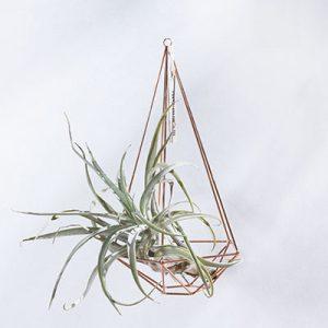空氣鳳梨掛飾-玫瑰金/鑽石型 (三種尺寸) 4