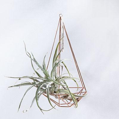 空氣鳳梨掛飾-玫瑰金/鑽石型 (三種尺寸) 1