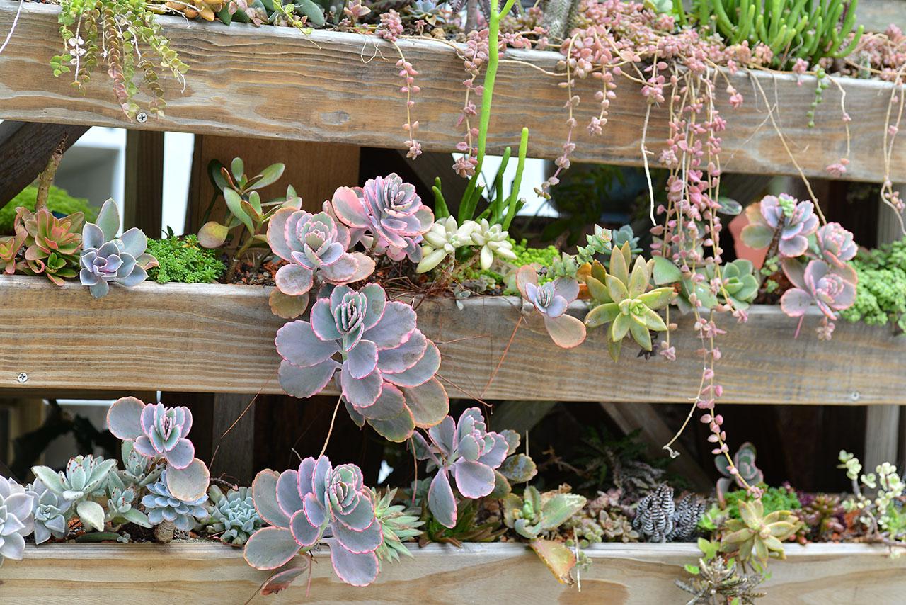 多肉植物栽培花園