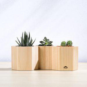 多肉蜂巢木盒 3 5