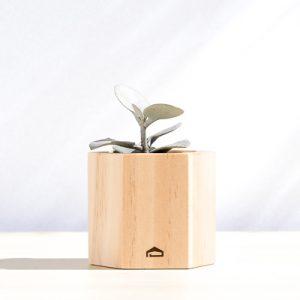 多肉蜂巢木盒 1 6