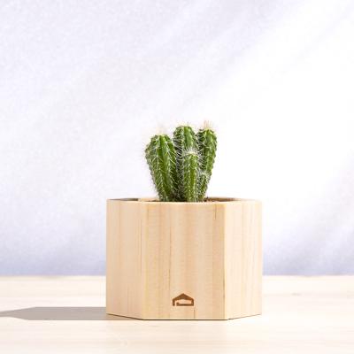六角木盒 - 多肉盆栽(中) 400X400 DSC8795 1