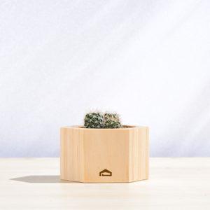 多肉小木盒 - 多頭仙人掌組 400X400 DSC8797 1