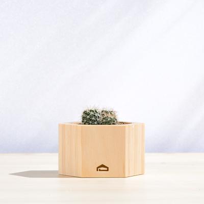 六角木盒 - 多肉盆栽(低) 400X400 DSC8797 1