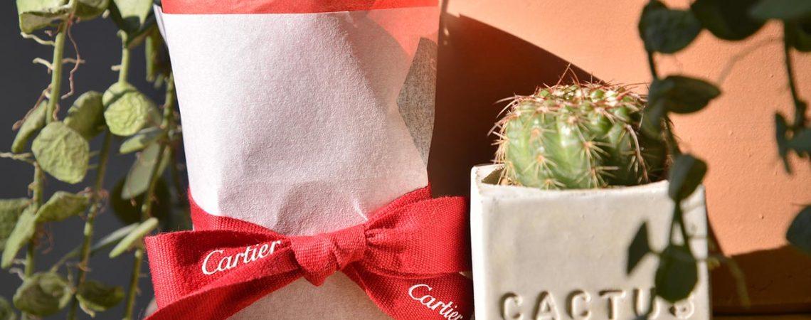 「媒體贈禮」Cartier 訂製仙人掌植栽組 1