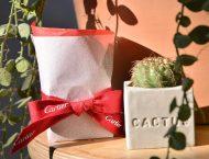 「媒體贈禮」Cartier 訂製仙人掌植栽組 11