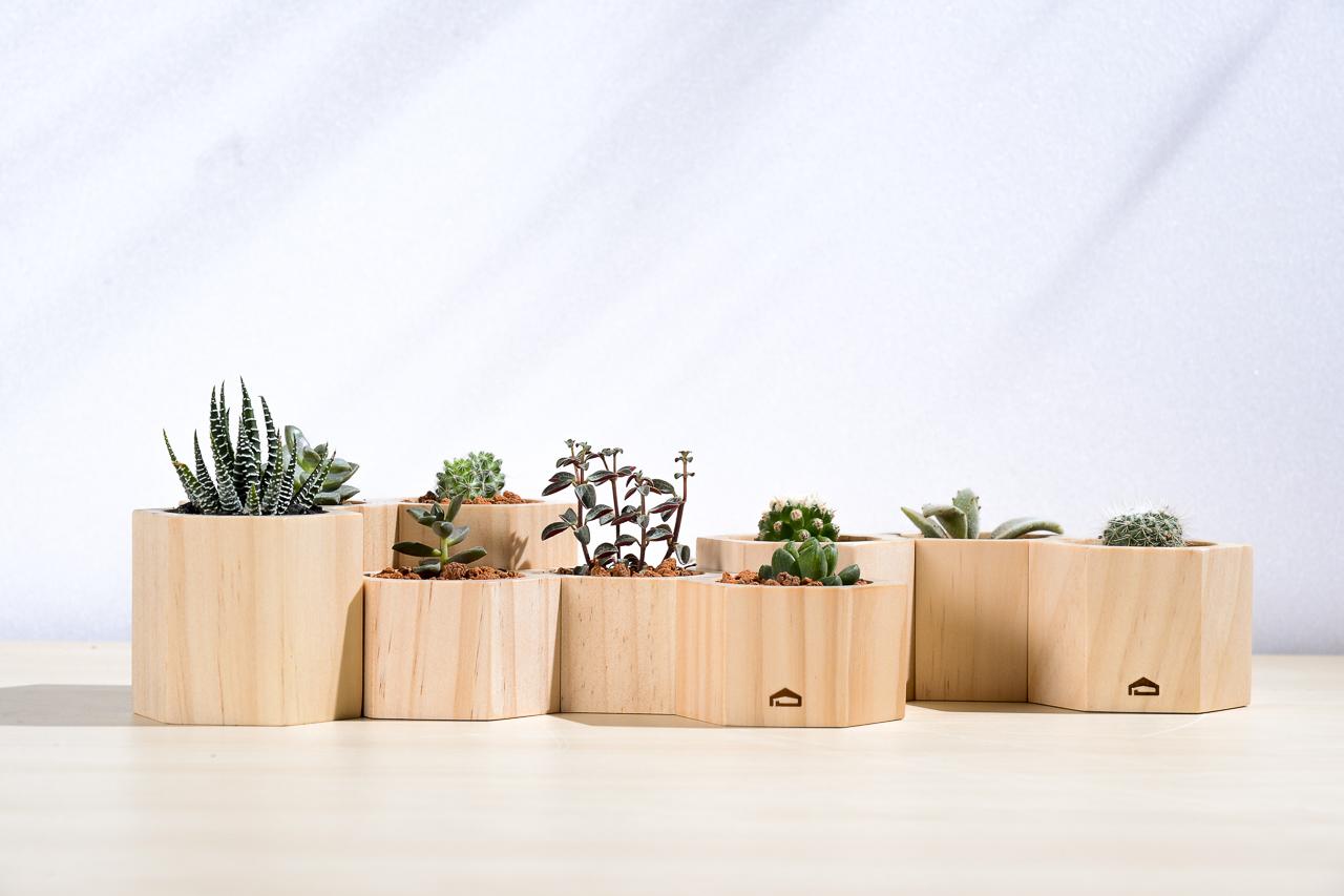 木質桌上盆栽