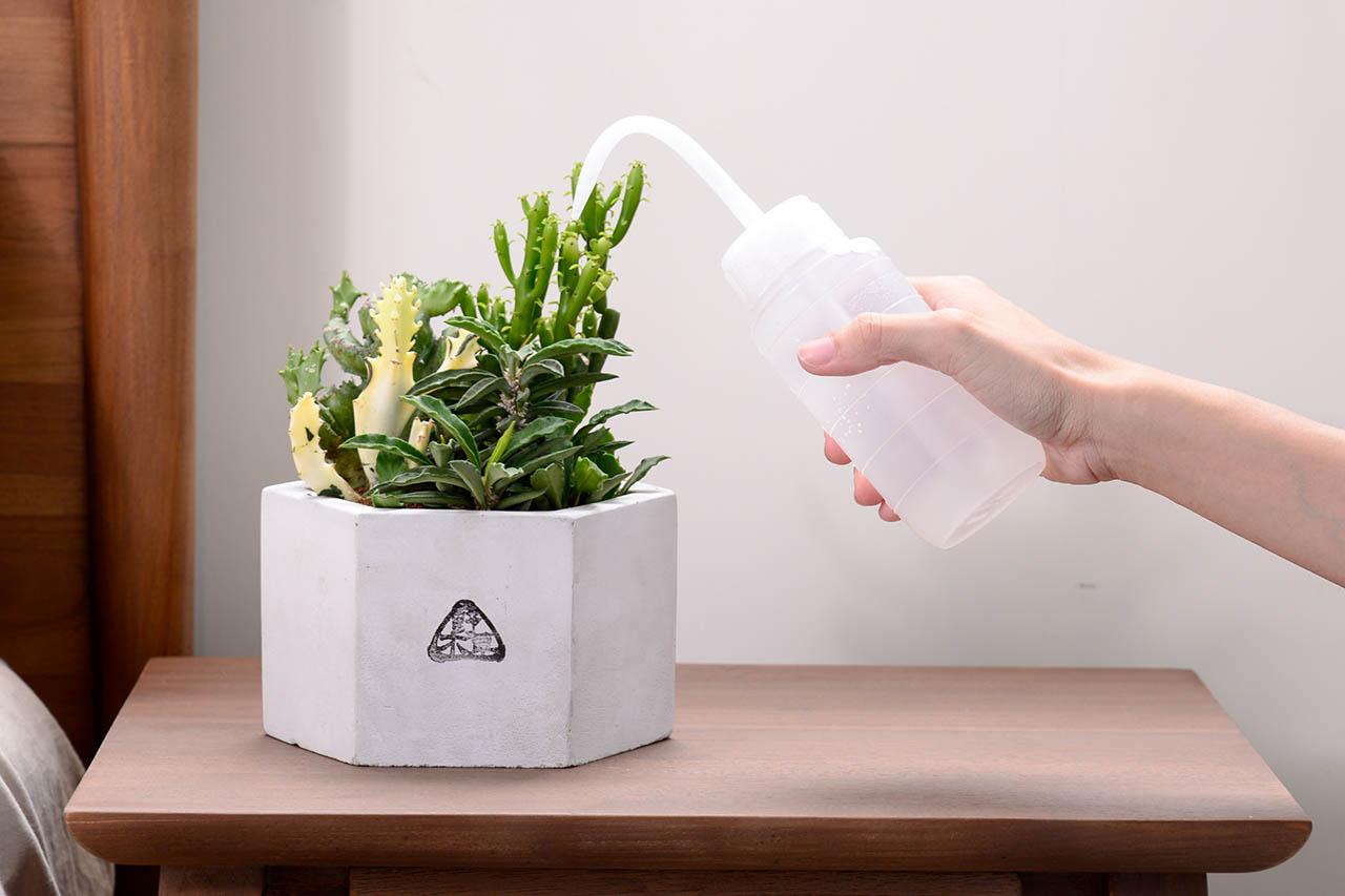多肉植物澆水器與多肉植物盆栽