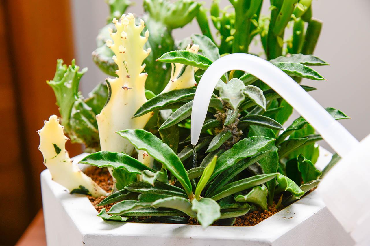 多肉植物澆水器與多肉植物盆