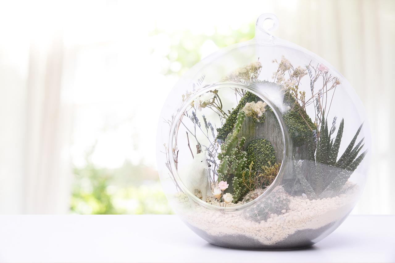 玻璃球小屋組盆課程,把多肉植物種進去,透過這堂課就可以學到如何裝置佈置