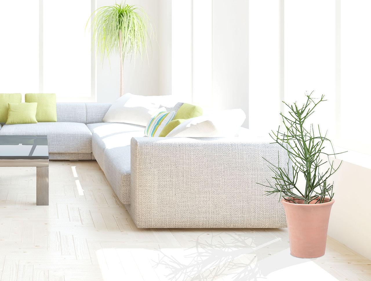 綠珊瑚盆栽放在室內空間是相當好的綠意擺設,送給新居落成的朋友最棒了