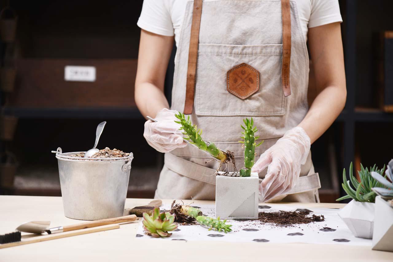 水泥手作課程教學過程第三堂課,將製作完成的水泥盆加入多肉植物專用土及多肉植物並種植入內